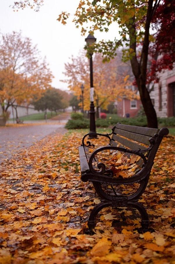 """Ken Hill on DIITU Communities """"Autumn Colors"""". From https://communities.diitu.com/post/-144837095264259"""