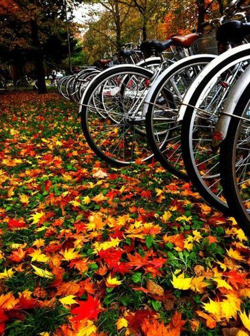 "Ada Ward on DIITU ""Autumn Colors""."
