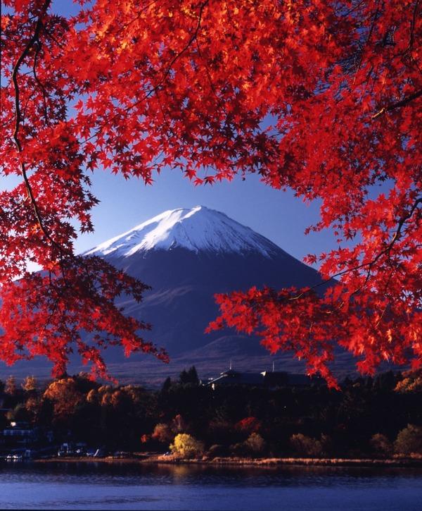 "Dena Mason on DIITU ""Autumn Colors""."