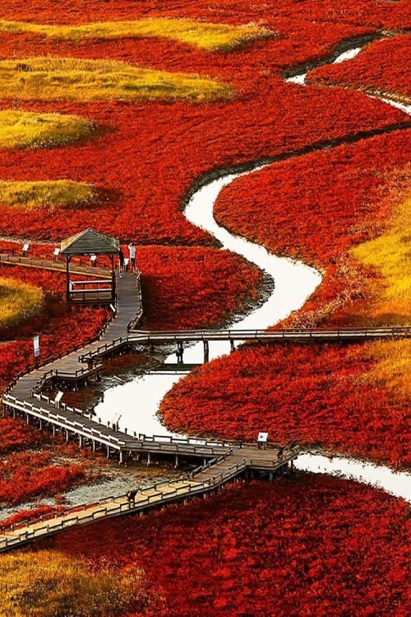 "Baron on DIITU ""Autumn Colors""."