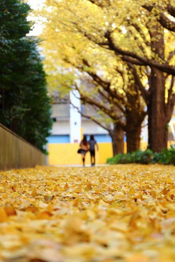 """Daisy Palmer on DIITU """"Autumn Colors""""."""