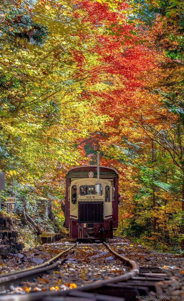 "Mandy Moss on DIITU ""Autumn Colors""."