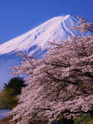 靜岡 富士山