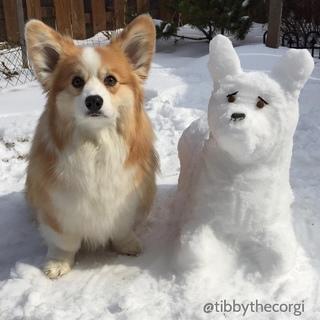 do u wanna build a snow dog🐶☃😱😍