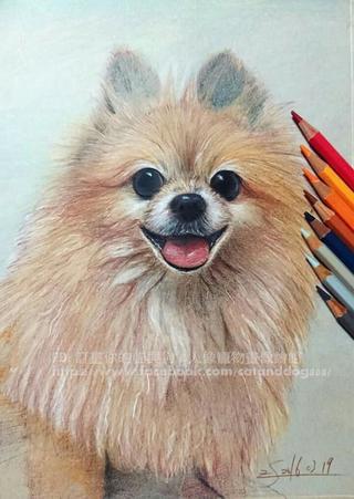 訂畫你的貓與狗&人像-寵物畫像繪館