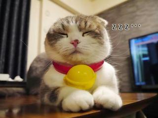 多啦A夢真貓版是你?!