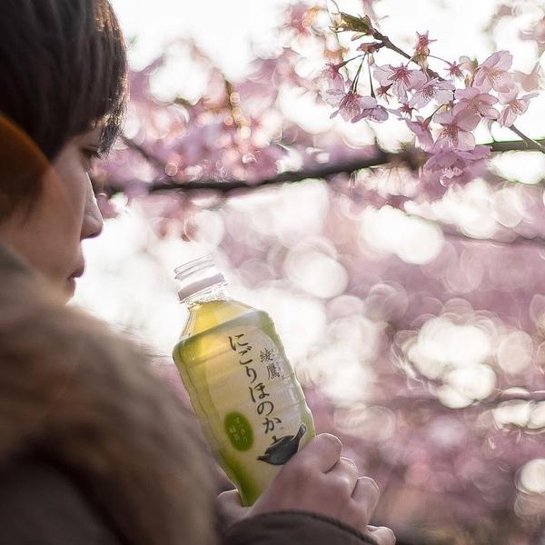 "Hsuan on DIITU ""🇯🇵今年不再錯過的日本櫻花祕境🇯🇵""."