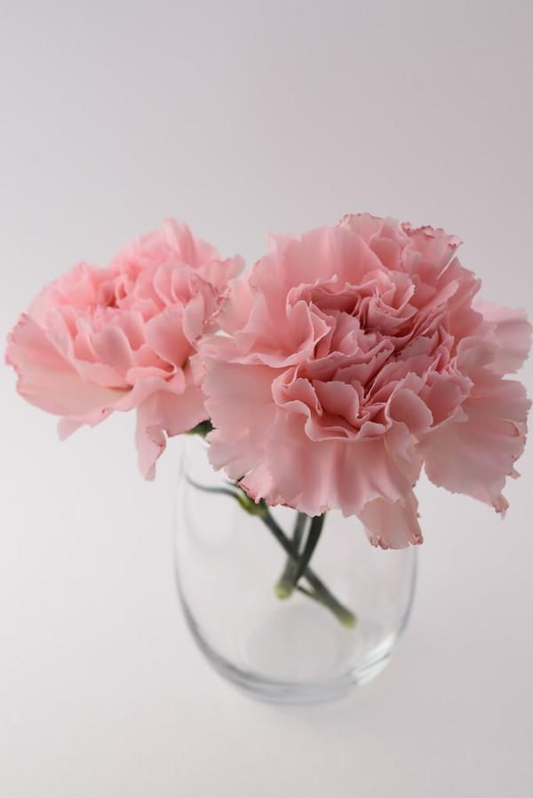 "penlover on DIITU Communities ""pink world"". From https://communities.diitu.com/post/pink+carnations-146235094842407"