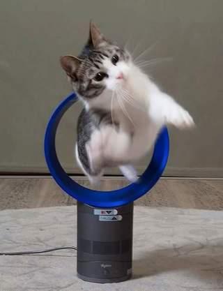 日本最紅電風扇變成貓的玩具
