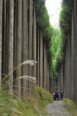 【古都22】高雄嬾綠新葉散策 — 北山圓木